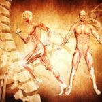 Anatomia Kinesiologica BG