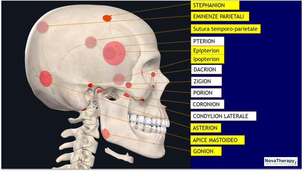 Neurovascolari vista laterale NovaTherapy®